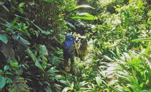 darien-gap-jungle