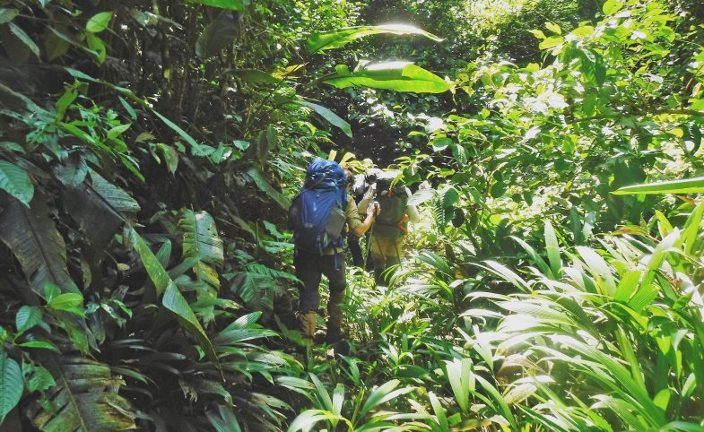 darien-gap-jungle