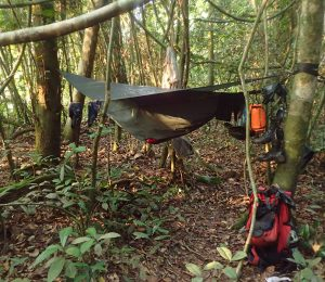 Hammock camping set up in the Darien Gap