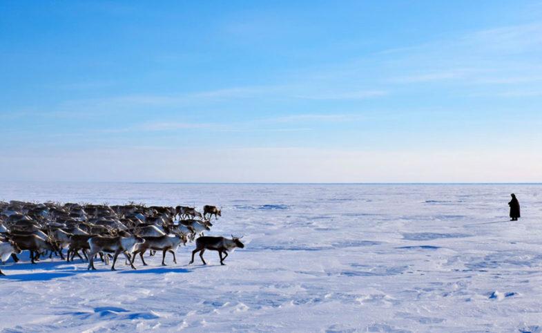 Nenets Header