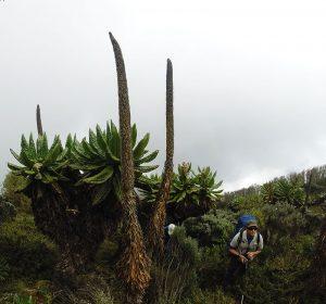 trek-rwenzoris