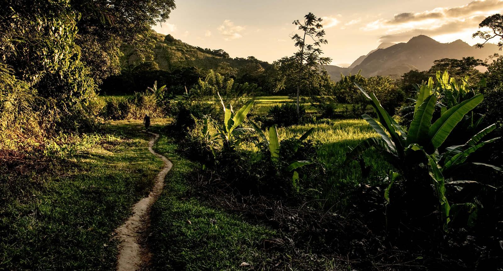 Madagascar jungle at dusk
