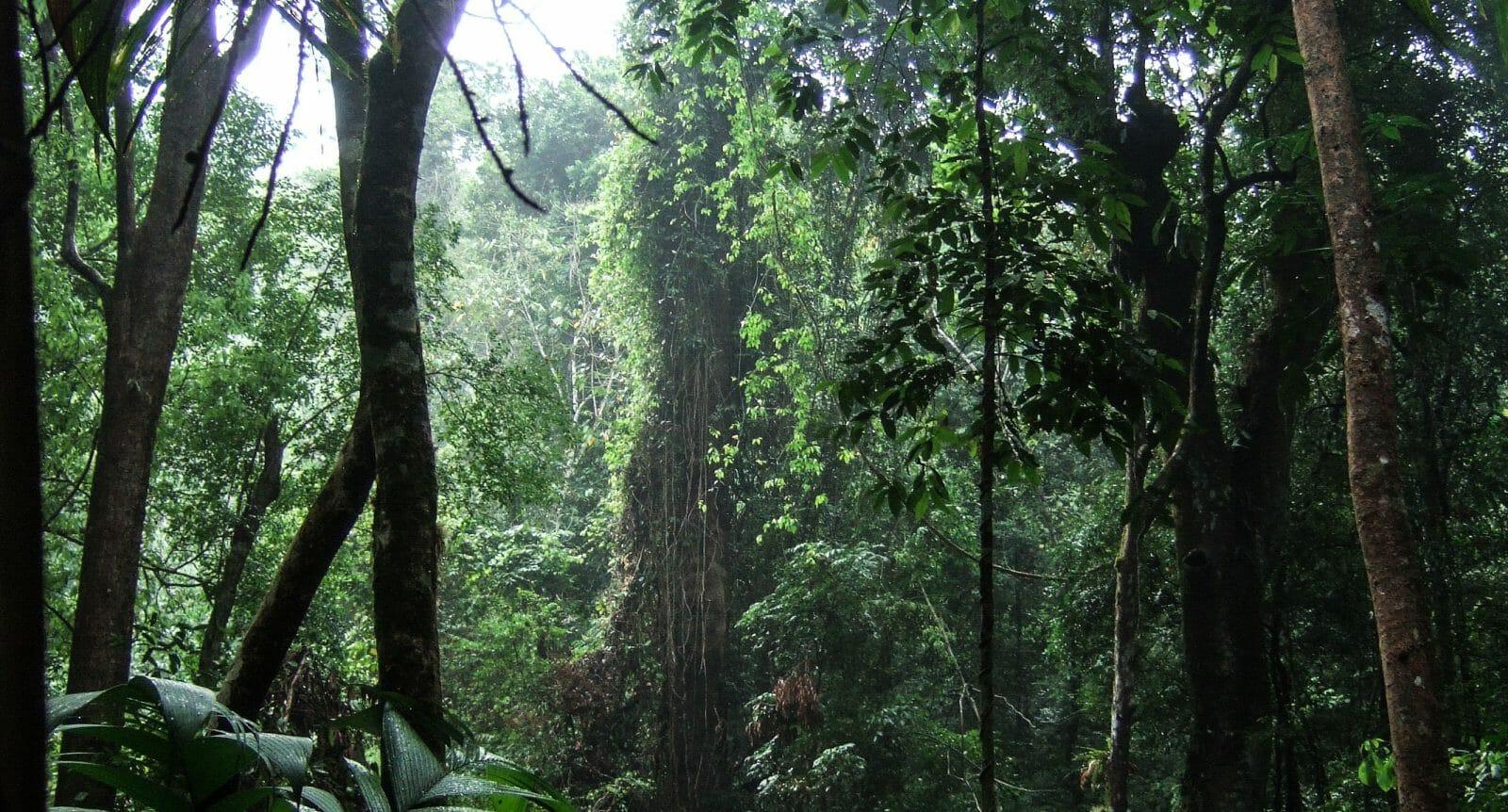 Panama's Darien Gap