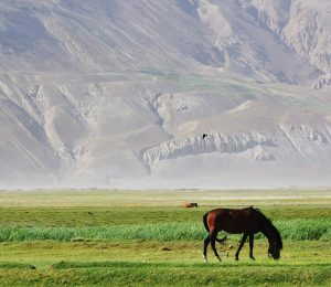 Horse in Pamir mountains Afghanistan grid square images2