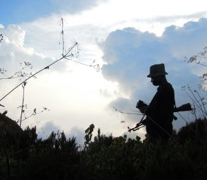 DRC Virunga expedition, man with gun walks through crops