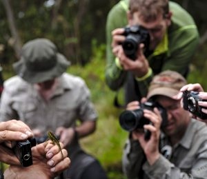 DRC Virunga expedition, photographing the unusual lizard