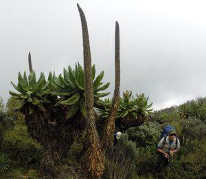 DRC Virunga expedition