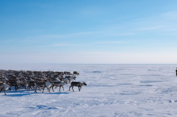 Nenets imagery (c) Heather Gallo