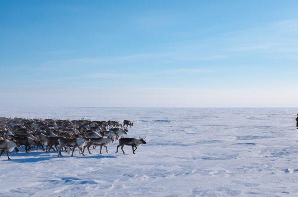 Nenets imagery (c) Heather Gallo