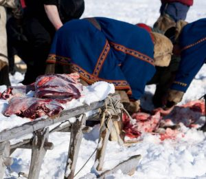 The Nenet nomads prepare an evening meal of Reindeer meat eaten either raw or cooked over a camp fire.