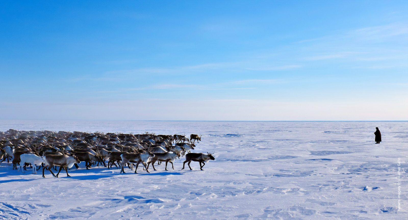 Nenets reindeer imagery (c) Heather Gallo