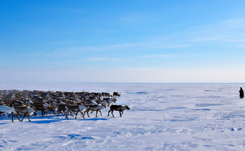 Nenets reindeer imagery (c) Heather Gallo