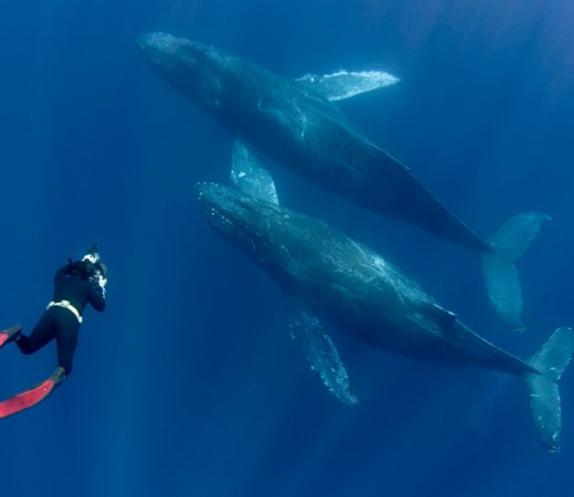 Ocean Film Festival image of whales and divers
