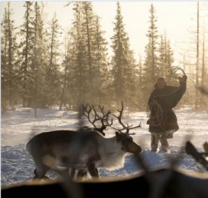 Nenets reindeer herding Siberia