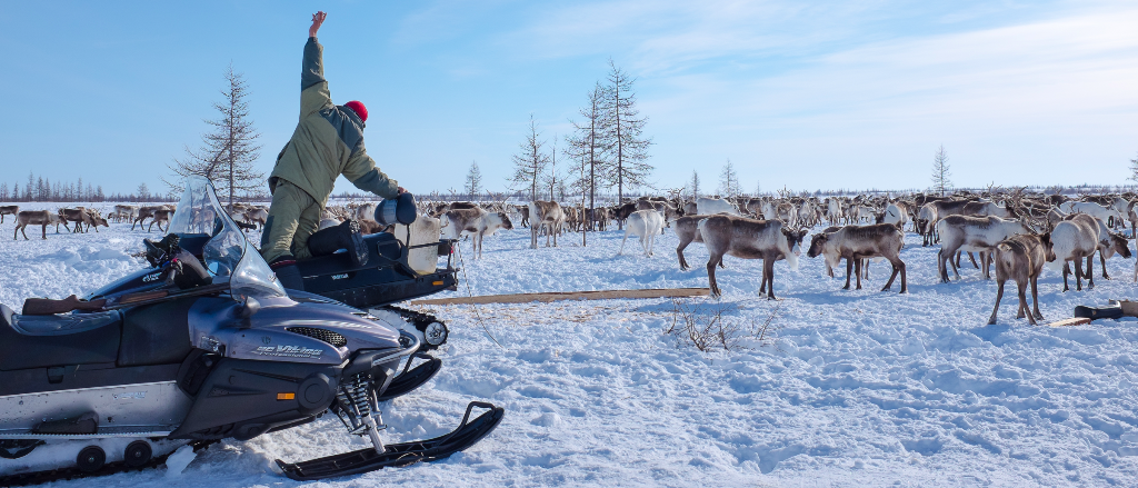Skidoo and reindeer on Nenets expedition