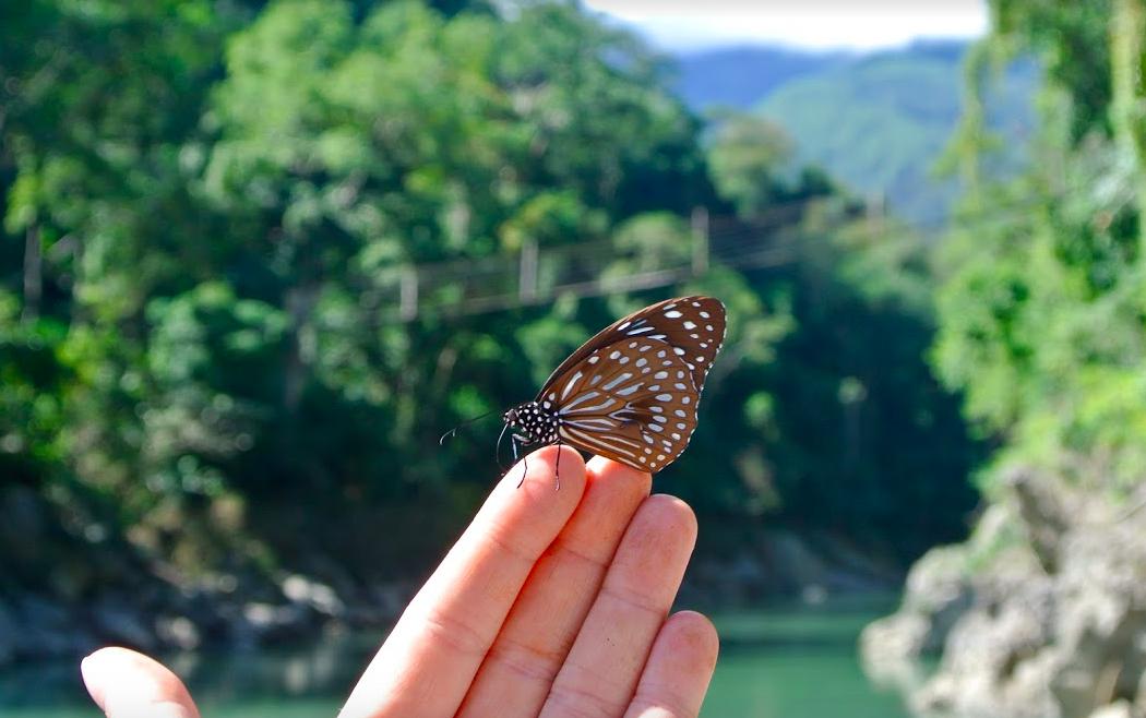 Wildlife in Burma