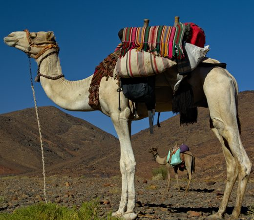 The use of camels for the Sinai expedition is very helpful to the Secret Compass team