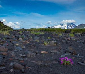 Kamchatka Flora