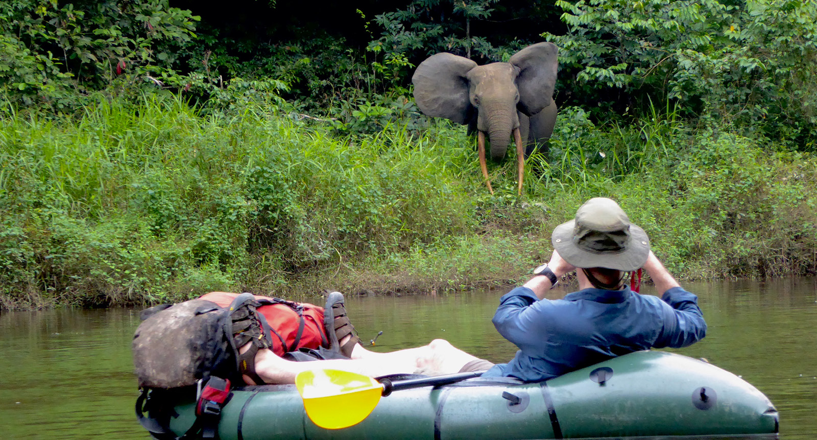Packrafting metres away from a wild African jungle elephant on the river bank of the Kongou river, Gabon