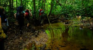Walking in the Ivindo National Park in Gabon