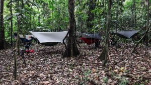 Wondered what camp looked like in the jungle when the floor is crawling with exotic hazards? Well... this.