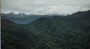 The only break the in Pan-American Highway, the Darien Gap is an immense, almost impassably dense jungle free from roads, home only to a handful of lost civilisations