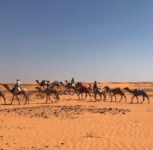 bayuda-desert
