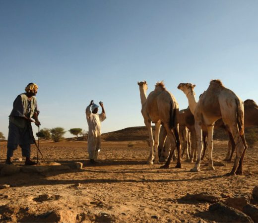 Camel handlers in the Bayuder desert, Sudan