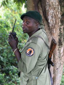 virunga park ranger