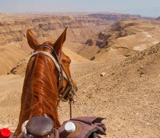 explore-israel-on-horseback