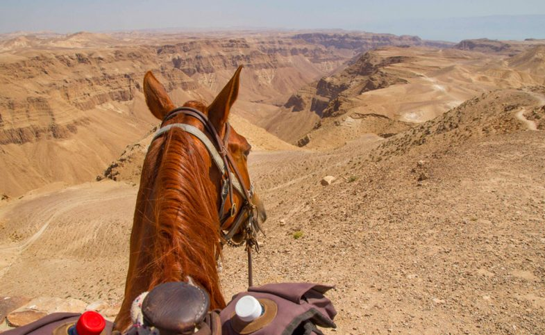 explore-israel-on-horseback