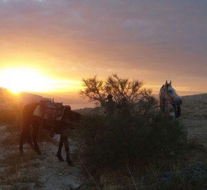 horse-riding-israel