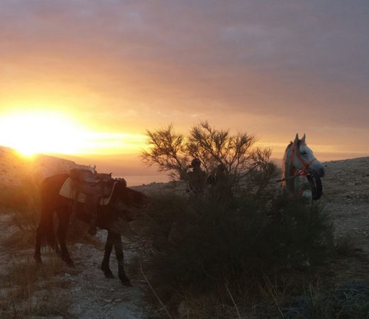 horse-riding-israel
