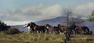 patagonia_horses_0