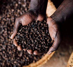 visit-coffee-plantations-uganda