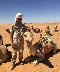 camel stroking in the Bayuda desert