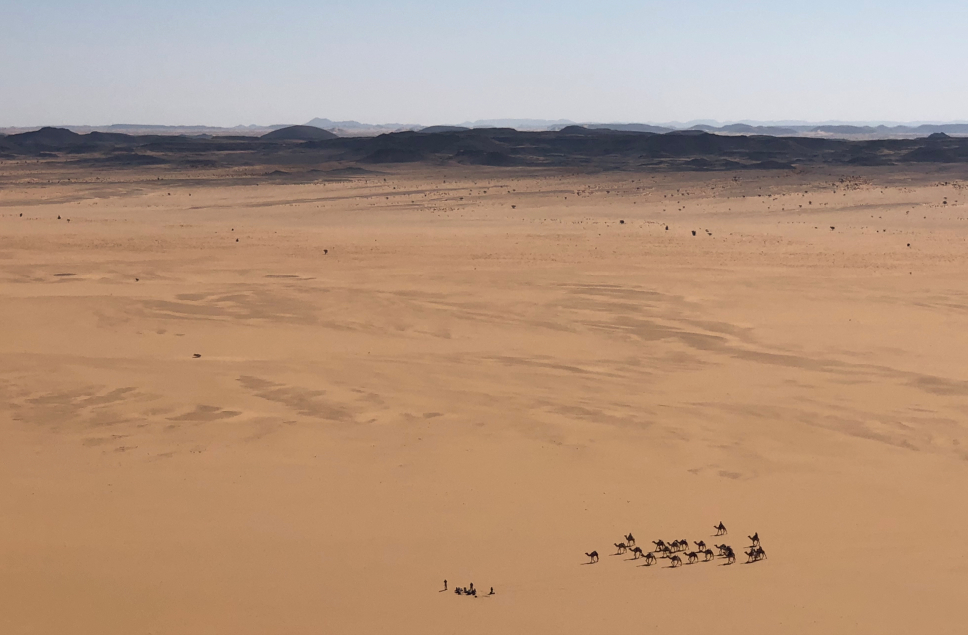 Camels crossing the Bayuda