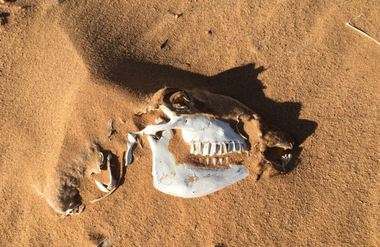 An unfortunate victim of the desert's harsh climates.