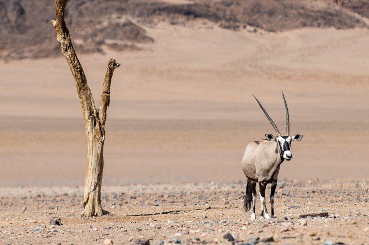 Fat Bike the Skeleton Coast | Namibia | Secret Compass