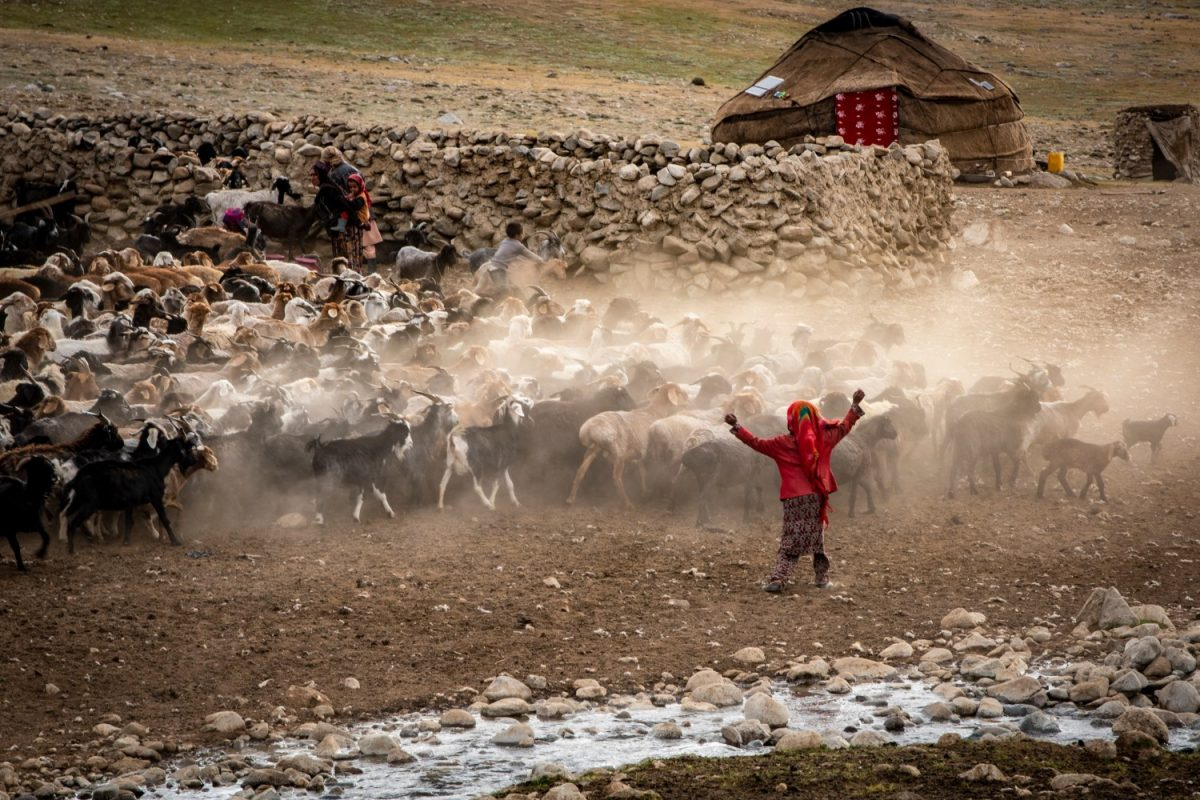 Farming communities within the Wakhan Corridor in Afghanistan, herd their cattle