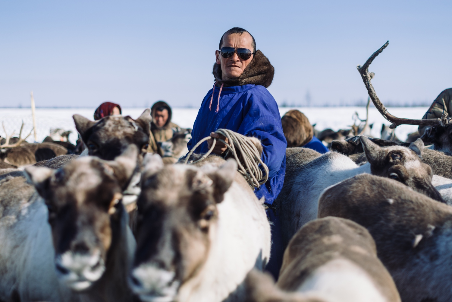 Rounding up the reindeer before moving camp © Lee Kearns