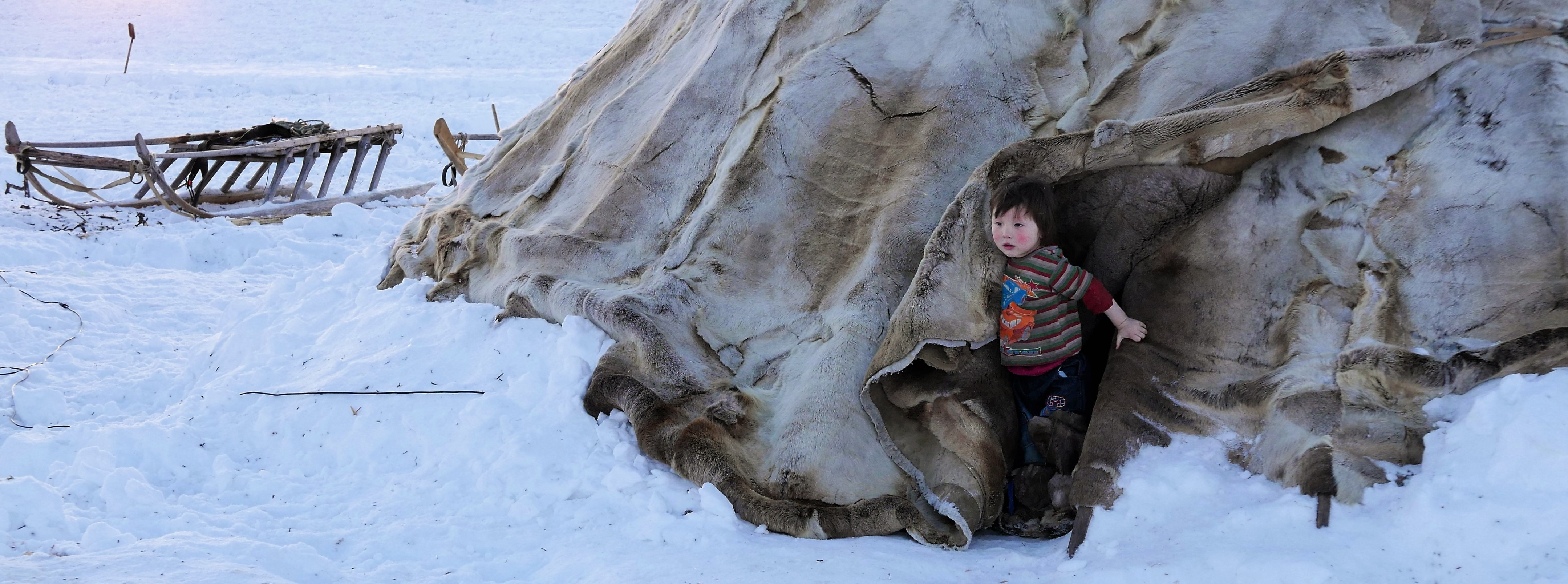 A Nenets child emerges from their tent